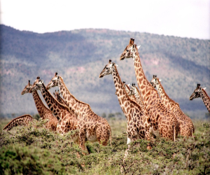 The Best Things to Do When Touring Africa
